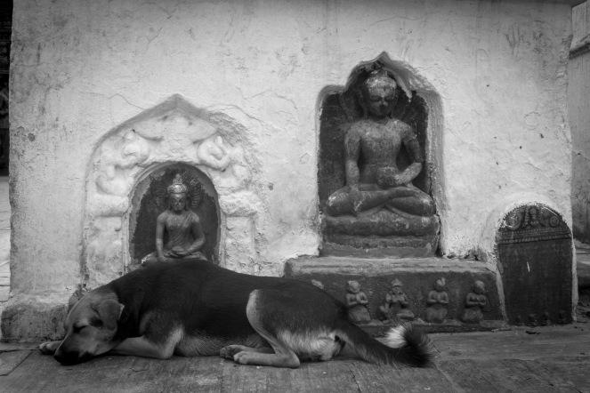 01-Cane dormiente a Swayambhunath,Kathmandu