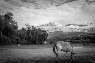 02-L'Annapurna vista nel tragitto tra Ghalegaun e Bhujun