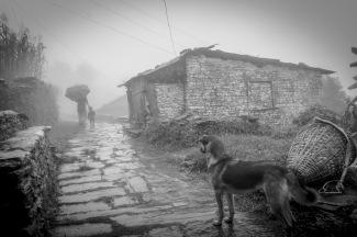 05-Randagio osserva una mamma con la sua bambina, Shanti Stupa, Pokhara