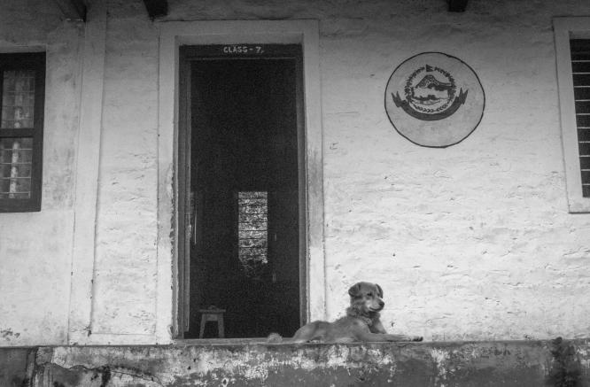 06-I cani spesso girano nei pressi delle scuole, specialmente nei villaggi. Sirubari
