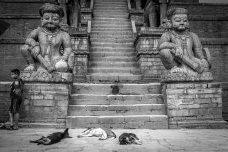 09-Randagi che riposano ai piedi della Pagoda a cinque piani a Bakhtapur