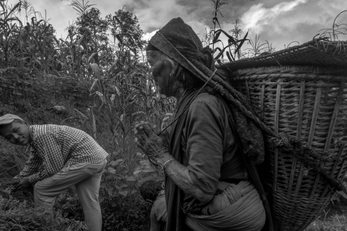 11-Raccoglitori di te nei campi tra Ghalegaun e Bhujun