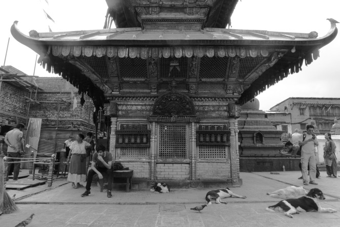 12-Randagi che riposano nei pressi dei luoghi sacri a Kathmandu