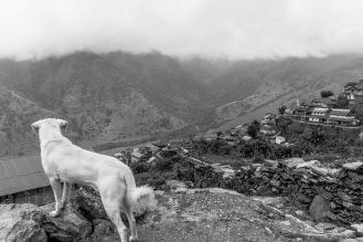 13-Randagio che ha seguito turisti in trekking da Ghalegaun a Bhujun
