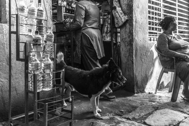 17-Randagio nei pressi di un negozio a Pokhara