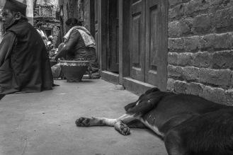 18-Randagio che riposa nel quartiere dei vasai di Patan
