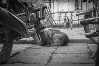 19-Un cane riposa adagiato a una moto a Kathmandu