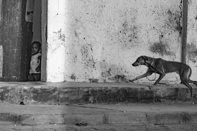Un cane torna a casa dal suo padroncino, Saint Louis, Senegal ©Alessio Chiodi