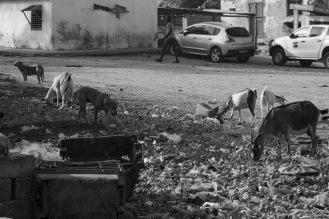 Numerosi cani condividono gli spazi con le capre che vagano indistrubate per le città e si cibano di ciò che trovano per strada ©Alessio Chiodi