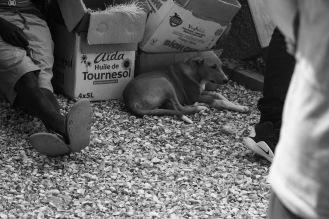 Un cane riposa davanti a degli scatoloni ai lati di una strada, Joal Fadiouth, Senegal ©Alessio Chiodi