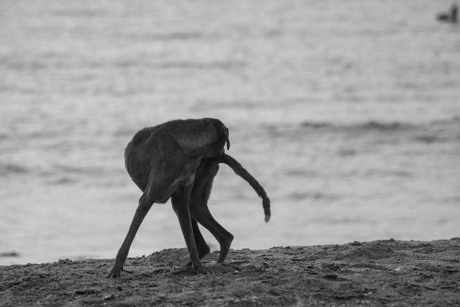 Pulci. Le condizioni igieniche di alcuni individui sono pessime e il rischio zoonosi è molto alto, M'Bour, Senegal ©Alessio Chiodi