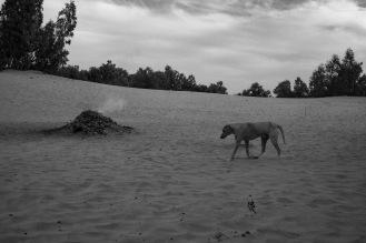 """""""Un cane del deserto"""". Questo esemplare vive nel campo tendato del deserto di Lompoul e viene accudito dai locali ©Alessio Chiodi"""