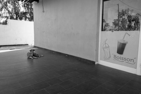 Probabilmente un cane appartenente ai proprietari di questo negozio, lungo la strada tra Dakar e Saint Louis ©Alessio Chiodi