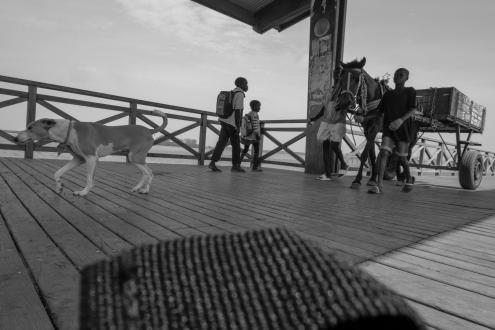 Un cagnolino segue il suo padroncino (a fianco al suo cavallo che traina un carro) lungo il ponte che conduce a Joal Fadiouth, Senegal ©Alessio Chiodi