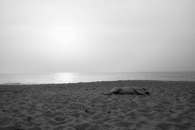 Un cane riposa sulle spiagge di M'Bour al tramonto. Non è difficile notare gruppi di animali che tentanto anche dei bagni in acqua nelle ore più calde del giorno, M'Bour, Senegal ©Alessio Chiodi